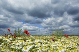 Wildflowers Growing in Field against Dramatic Sky Photographic Print by Frank Krahmer