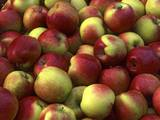 Mcintosh Apples Photographic Print by Steve Terrill