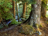 Forest along the Zig Zag River Photographic Print by Steve Terrill