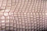 Crocodylus Porosus (Saltwater Crocodile) - Scales Photographic Print by Paul Starosta