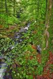 Mountain Brook in Beech Forest Photographic Print by Frank Krahmer