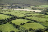 Sheep Graze on the Dingle Peninsula Photographic Print by Hal Beral