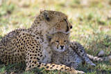 Cheetah Mother and Cub Resting in Shade Together Photographic Print by Momatiuk - Eastcott