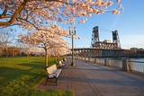 Sunrie Cherry Trees and Steel Bridge, Portland Oregon. Photographic Print by Craig Tuttle