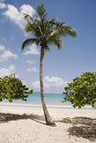 Palm Tree on Beach at Magens Bay Photographic Print by Macduff Everton