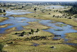 Aerial View of Herd of African Buffalo Photographic Print by Martin Harvey