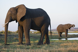 Elephants at Water Hole Photographic Print by Theo Allofs