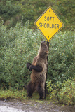 Young Grizzly Bear Rubbing against Road Sign Photographic Print by Momatiuk - Eastcott