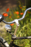 Old Bicycle and Flowers Photographic Print by Guido Cozzi