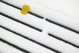 Yellow Leaf on Snow Photographic Print by Andria Patino