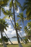 Palm Trees, Lambert Beach, Tortola, British Virgin Islands Photographic Print by Macduff Everton