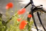 Bicycle and Flowers Photographic Print by Guido Cozzi
