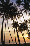 Palm Trees in Maldives Photographic Print by Peter Adams