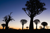 Silhouettes of Trees at Dusk Photographic Print by Theo Allofs