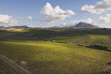 Vineyards near Partinico on Sicily Photographic Print by Guido Cozzi