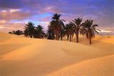 Sahara Desert in Tunisia Fotografisk tryk af Peter Adams