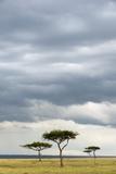 Savannah with Acacia Trees Photographic Print by Sergio Pitamitz