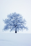 Winter Landscape with Snow Covered Oak Photographic Print by Frank Krahmer
