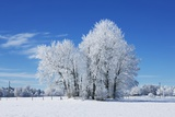 Winter Landscape with Snow Covered Trees Photographic Print by Frank Krahmer