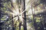 Sun Beams in Mist in Beech Forest Photographic Print by Frank Krahmer
