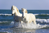 Camargue Horses in Surf Photographic Print by Frank Lukasseck