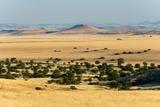 Palmwag Concession, Damaraland, Namibia. Photographic Print by Sergio Pitamitz