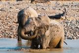 African Elephant (Loxodonta Africana) Photographic Print by Sergio Pitamitz