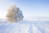 Frost and First Snow on Meadow Photographic Print by Frank Lukasseck