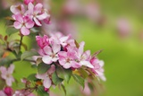 Close-Up View of Spring Blossom Photographic Print by Frank Krahmer