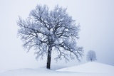 Winter Landscape with Snow Covered Oak and Lime Tree Photographic Print by Frank Krahmer