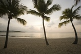 Palm Trees at Sunset Photographic Print by Macduff Everton