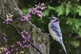 Bird on Tree, Close-Up Papier Photo par Gary Carter