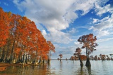 Cypress Trees in Autumn Colors, Bayou, New Orleans, Louisiana, USA Photographic Print by Frank Krahmer