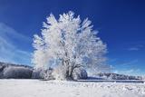 Frank Krahmer - Winter Landscape with Snow Covered Tree Fotografická reprodukce