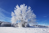 Winter Landscape with Snow Covered Tree Photographic Print by Frank Krahmer