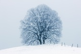 Winter Landscape with Snow Covered Lime Tree Photographic Print by Frank Krahmer