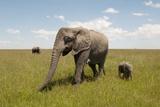 African Elephant and Cub (Loxodonta Africana), Masai Mara, Kenya Photographic Print by Sergio Pitamitz