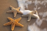 Starfish with Evening Surf Rolling In Photographic Print by Terry Eggers