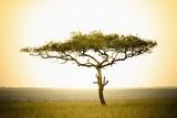 Acacia, Masai Mara, Kenya Photographic Print by Sergio Pitamitz