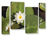 Lily Pad, 4 Piece Gallery-Wrapped Canvas Staggered Set Poster by Cody York