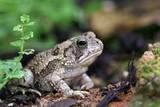 Fowler's Toad Photographic Print by Gary Carter