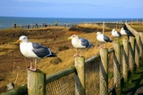 Seagulls at Boiler Bay, Oregon, USA Photographic Print by Craig Tuttle