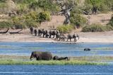 African Elephants (Loxodonta Africana) Photographic Print by Sergio Pitamitz