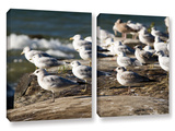 Pigeons, 2 Piece Gallery-Wrapped Canvas Set Prints by Cody York