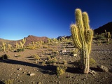 Landscape, Bolivian Desert, Bolivia Photographic Print by Massimo Borchi
