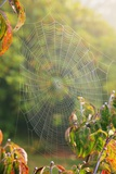 Spiderweb at Sunrise Photographic Print by Craig Tuttle