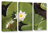 Lily Pad, 3 Piece Gallery-Wrapped Canvas Set Poster by Cody York