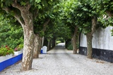Tree Lined Walkway around the Village of Obidos Photographic Print by Julianne Eggers