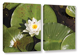 Lily Pad, 2 Piece Gallery-Wrapped Canvas Set Art by Cody York