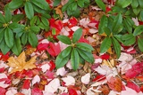 Close-Up of Autumn Leaves on Ground Photographic Print by Craig Tuttle